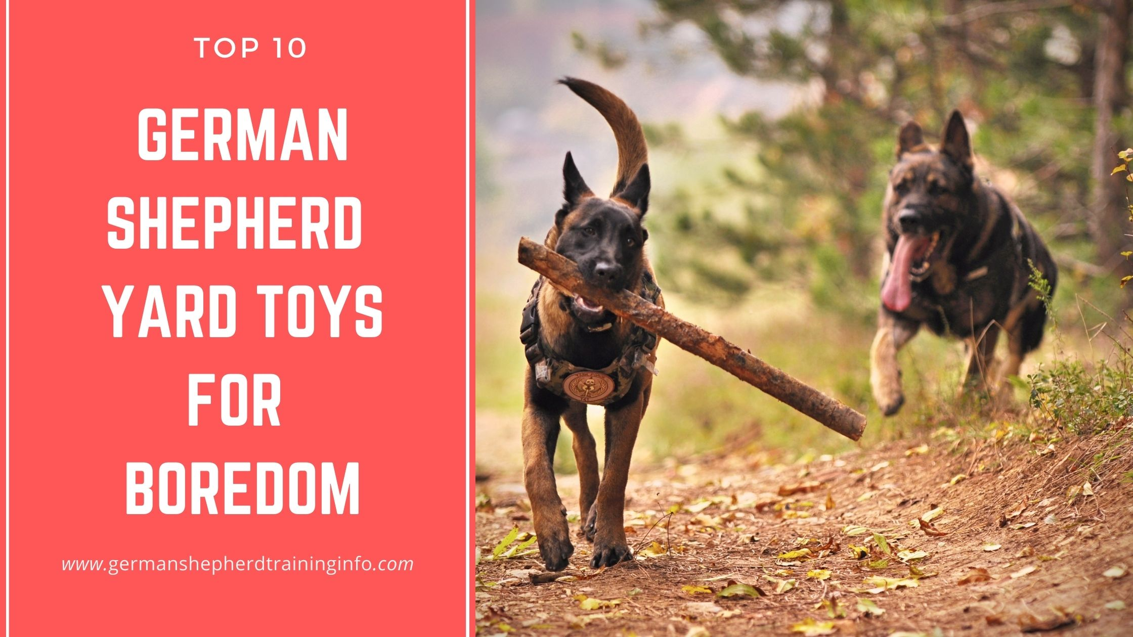 10 Cool German Shepherd Yard Toys for Boredom