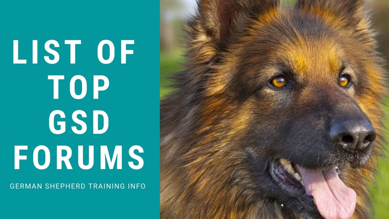 Top 10 German Shepherd Discussion Forums You Must Know