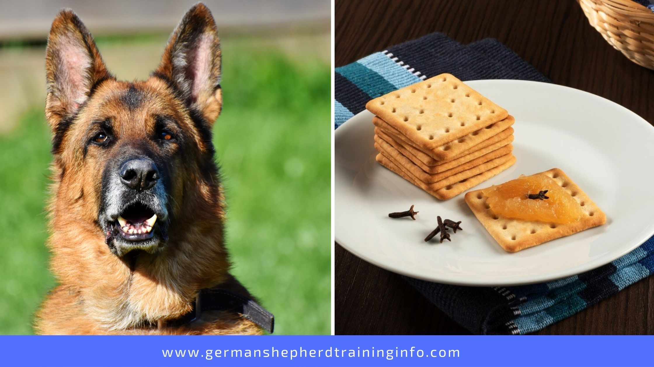 Can dogs eat peanut butter crackers?
