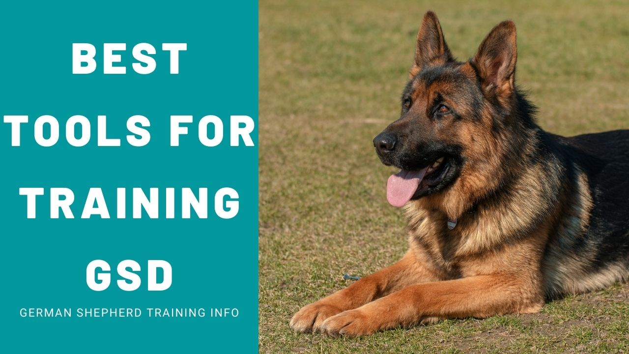 7 Must-Have Tools For Training Your German Shepherd