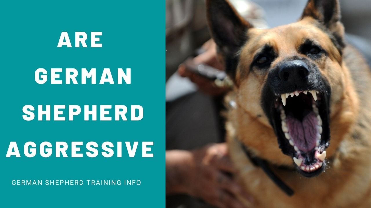 Are German Shepherds Aggressive Towards Humans?