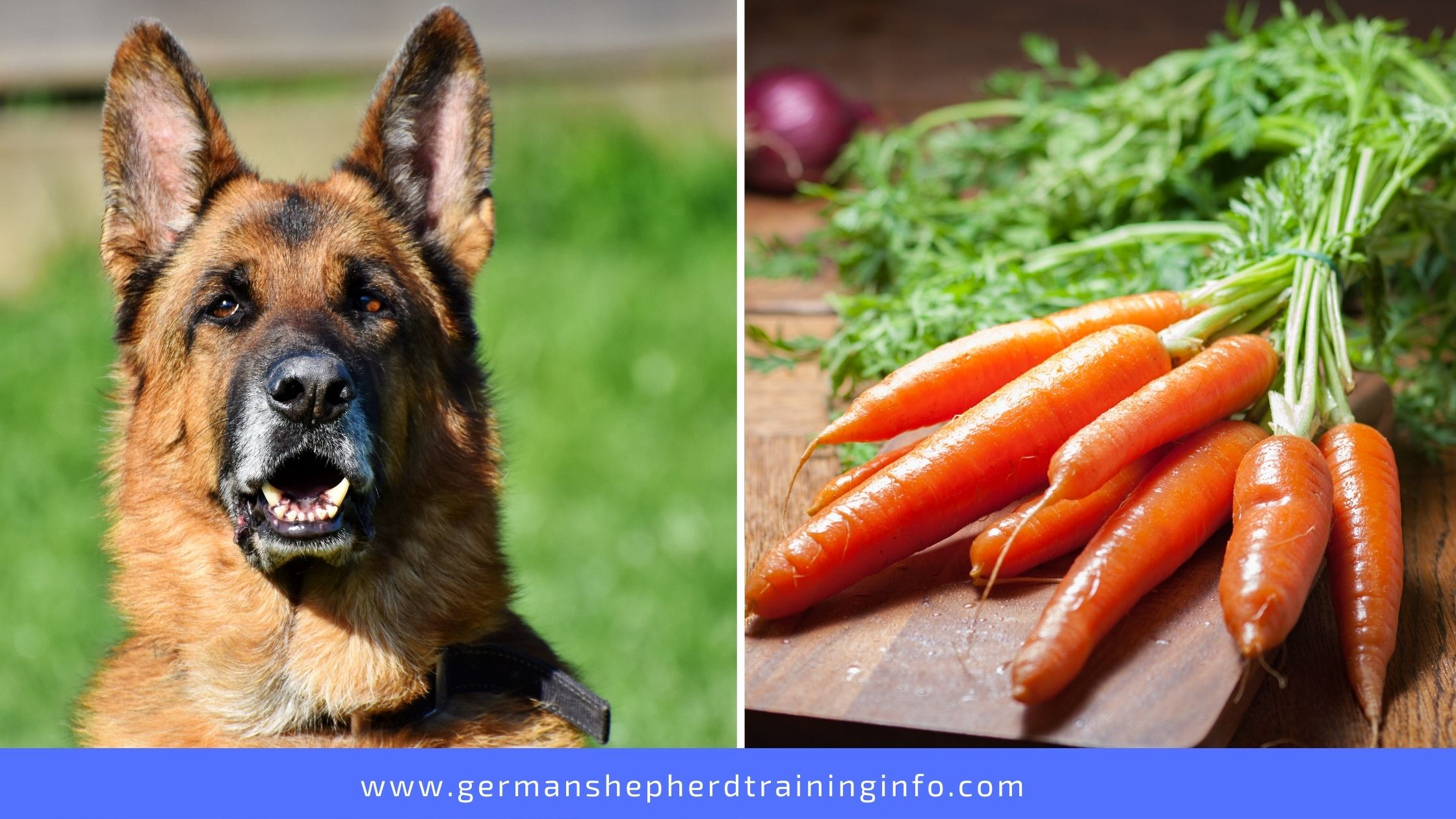 Can German Shepherds eat carrots?