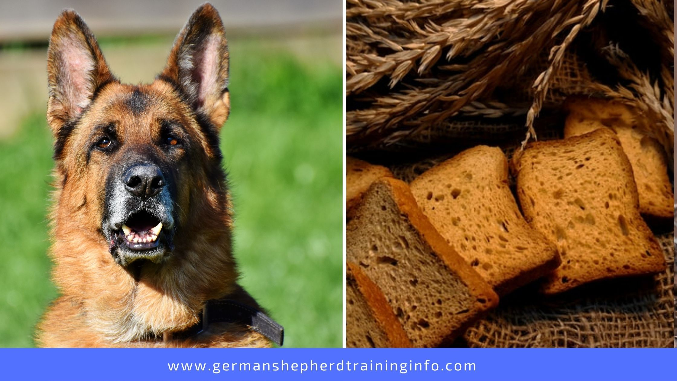 Can Dogs Eat Multigrain or Brown Bread?